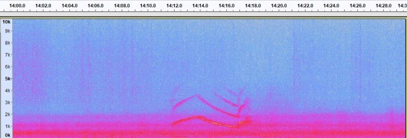 spectrogram_siren