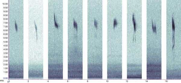 Variation in Redwing Turdus iliacus calls (Simon Gillings)
