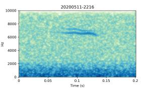 20200511-2216-CB4-Gillings-PS-XX-(zzz)