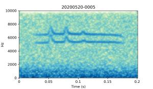 20200520-0005-CB4-Gillings-PS-SF