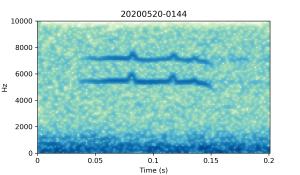 20200520-0144-CB4-Gillings-PS-SF B