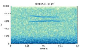 20200521-0119-CB4-Gillings-PS-XX-(zzz)