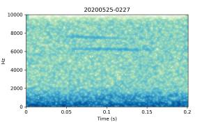 20200525-0227-CB4-Gillings-PS-XX-(zzz)