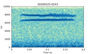 20200525-0243-CB4-Gillings-PS-XX-(zzz)