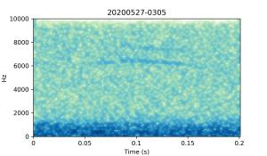 20200527-0305-CB4-Gillings-PS-XX-(zzz)