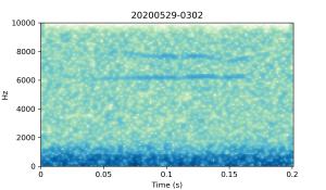 20200529-0302-CB4-Gillings-PS-XX-(zzz)