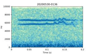 20200530-0136-CB4-Gillings-PS-SF-(check) B